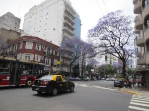 Jacaranda season on Buenos Aires city streets.