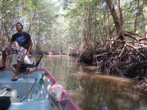 Giovani Dias navigates his boat through a mangrove forest.